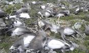 Na Uy: 323 con tuần lộc bị sét đánh chết