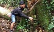 Đá xanh, gỗ quý khiến rừng thiêng chảy 'máu'