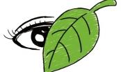 """Bài Văn đạt điểm 10 thi Đại học ở Trung Quốc: """"Thành tích như chiếc lá, đừng để lá che mắt…"""""""