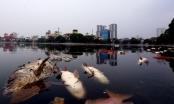 Chủ tịch UBND TP Hà Nội chỉ đạo khẩn cấp xử lý việc cá chết hàng loạt tại hồ Hoàng Cầu