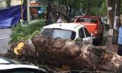 """Hà Nội: Mưa lốc khiến cây xanh bị đổ đè bẹp """"xế hộp"""""""