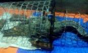 Hà Nội: Người dân lo lắng, chính quyền vào cuộc tìm kiếm cá sấu trên sông Tích