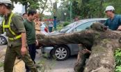 Hà Nội: Cây lớn bất ngờ bật gốc đè bẹp đầu xe ô tô, nhiều người phát hoảng
