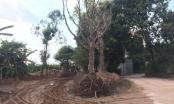Vĩnh Phúc: Tồn đọng nhiều sai phạm trong sử dụng đất đai