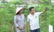 Đồng hành cùng thực phẩm sạch: Khám phá vườn rau hữu cơ