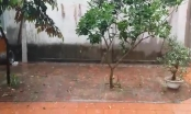 Hà Nội: Cận cảnh trận mưa đá lớn diễn ra ở làng cổ Đường Lâm