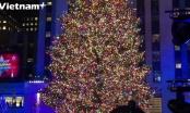 Thắp sáng cây thông khổng lồ chào đón mùa Giáng sinh tại New York
