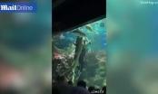 Clip: Thích thú với cảnh thợ lặn khiêu vũ cùng sát thủ biển cả