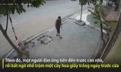 [Clip]: Phẫn nộ cảnh người đàn ông vác nhầm cây hoa giấy trước nhà dân