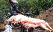 Hà Tĩnh: Lợn chết do dịch bệnh chuẩn bị lên bàn ăn thì bị phát hiện
