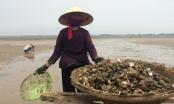 Cùng với cá, hơn 60 tấn ngao chết trắng tại Hà Tĩnh