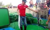 Một tàu ngư dân ở Hà Tĩnh lãi gần 400 triệu vì trúng đậm mẻ cá thu