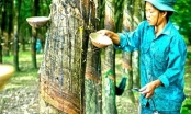 Tập đoàn Công nghiệp cao su Việt Nam thoái vốn tại 5 Cty thủy điện