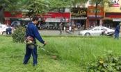 Hà Nội ấn định cụ thể số lần cắt cỏ, tưới nước cho cỏ....