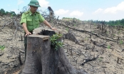 Bình Định: Kỷ luật Chủ tịch và Phó Chủ tịch Thường trực UBND huyện An Lão vì liên quan đến phá rừng