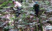 Trong rừng Nam Trà My có đại gia tài sản 500 tỷ đồng