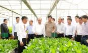 Chùm ảnh - Thủ tướng Nguyễn Xuân Phúc thăm mô hình nông nghiệp sạch tại Lâm Đồng