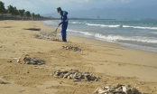 Nghệ An: Bàng hoàng phát hiện thi thể người phụ nữ chết bên bờ biển