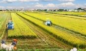 Chuyển mục đích sử dụng đất tại 2 tỉnh Hưng Yên và Vĩnh Phúc