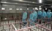 Thủ tướng kiểm tra, đôn đốc công tác phòng chống dịch tả lợn Châu Phi