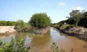 Sinh thái Thủy lợi trúng hai gói thầu trồng rừng ven biển