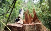 Đình chỉ công tác Phó Giám đốc Ban Quản lý rừng phòng hộ Sơn Hòa