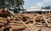 4 dự án chậm tiến độ tại Thanh Hóa sau gia hạn 24 tháng bây giờ ra sao?