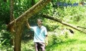 Tuyên Quang: Trớ trêu số phận người trồng rừng