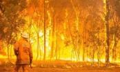 Australia cảnh báo cháy rừng trên toàn bang New South Wales
