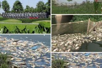 Công viên Yên Sở: Cá chết trắng hồ, gây ô nhiễm nặng!