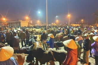 Sôi động phiên chợ trâu, bò lớn nhất nước trong ngày giao dịch cuối cùng