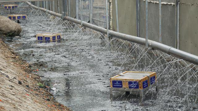 Mục sở thị công nghệ biến bùn thành CO2 và nước trên sông Tô Lịch