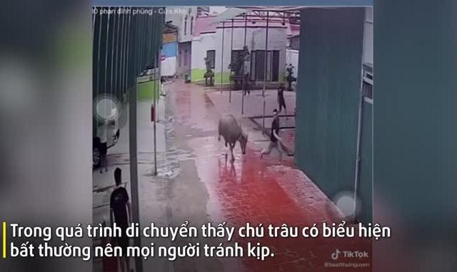 """Video: Kinh hoàng cảnh """"trâu điên"""" đuổi húc khiến nhiều người bỏ chạy tán loạn"""