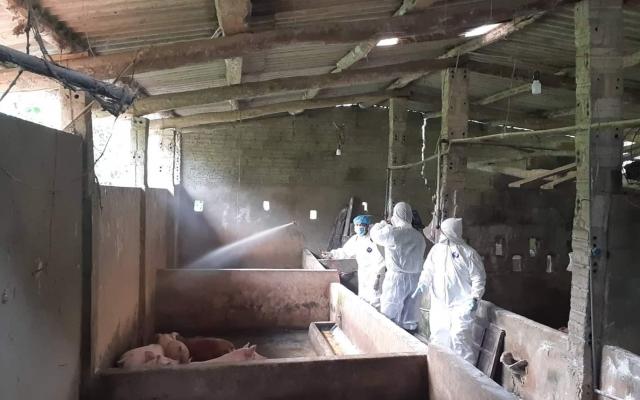 Dịch tả lợn châu Phi xuất hiện tại Hà Giang