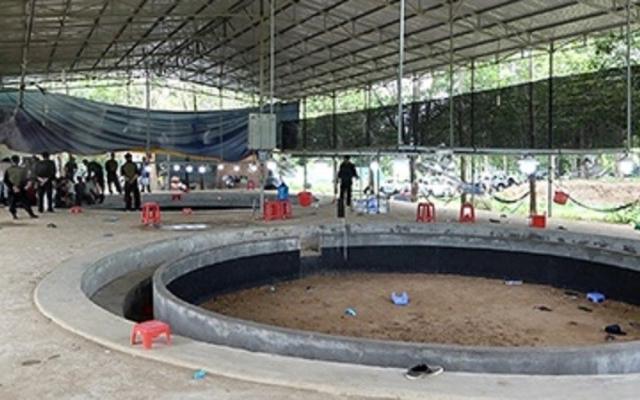 Bắt quả tang hơn 100 người tham gia cá độ đá gà