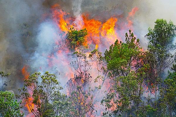 Đà Nẵng: Hơn 2ha rừng bị thiêu rụi sau gần 3 giờ bốc lửa