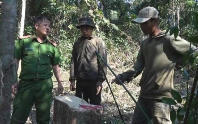 """Đắk Lắk: Bắt quả tang nhóm """"lâm tặc"""" ngang nhiên vào rừng chặt hạ gỗ trái phép"""