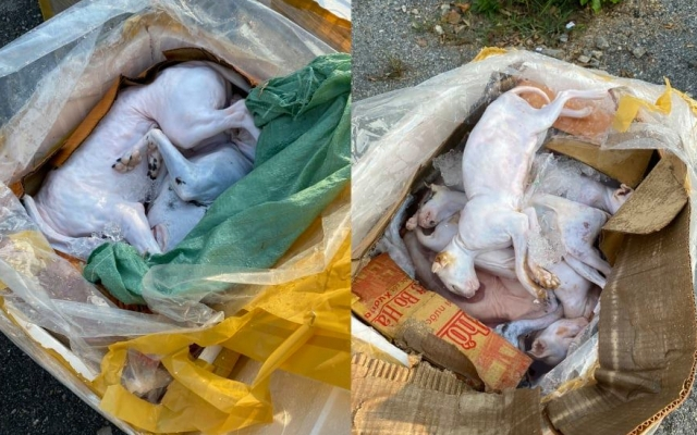 Nghệ An: Kiểm tra xe khách phát hiện hơn 600 kg thịt, nội tạng động vật đã bốc mùi