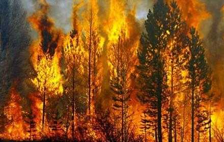 Một cụ bà tử vong thương tâm sau khi cùng mọi người nỗ lực dập tắt đám cháy