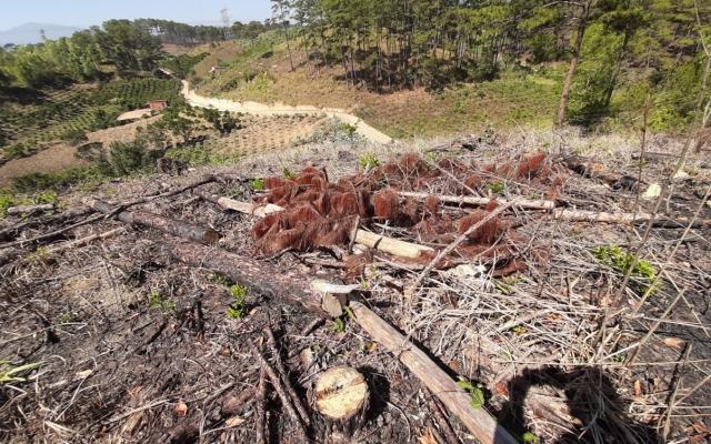 Lâm Đồng: Xử lý nghiêm vụ phá rừng ở Vườn Quốc gia Bidoup - Núi Bà