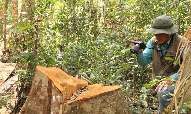 Kiểm tra, xử lý thông tin báo nêu về phá rừng tại tỉnh Lâm Đồng