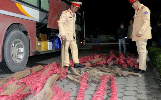 Khám xe khách phát hiện gần 1 tấn gỗ trắc quý hiếm