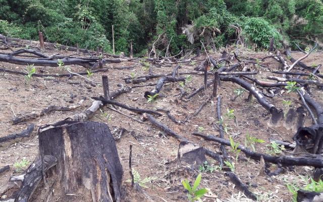 Bắt tạm giam 2 cán bộ Ban quản lý rừng phòng hộ ở Nghệ An