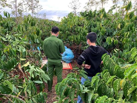 Đắk Lắk: Tá hỏa phát hiện thi thể nam giới trong rẫy cà phê