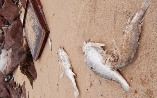 Công an Nghệ An điều tra nguyên nhân cá chết hàng loạt