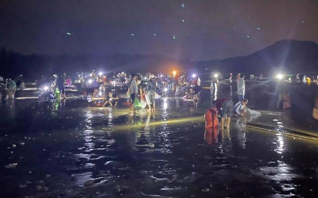 """""""Lộc"""" tấp đầy bãi biển, dân hò nhau kéo về trong đêm"""