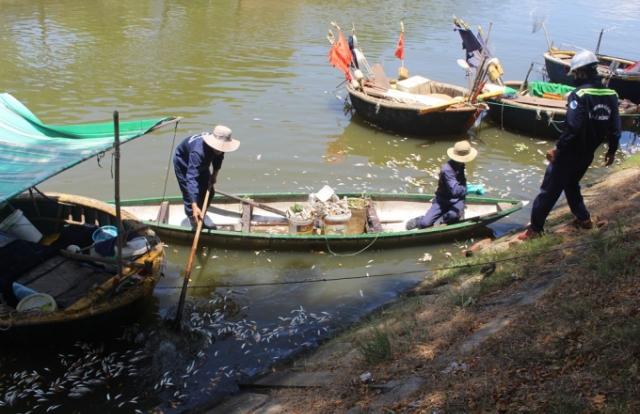 Đà Nẵng: Cá chết hàng loạt trên khu vực kênh Phú Lộc