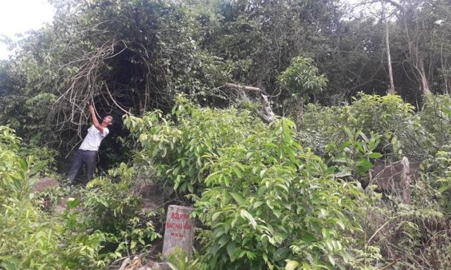 Ban quản lý Rừng phòng hộ Bắc Hải Vân: Cán bộ chiếm rừng làm 'của riêng'