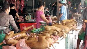 Từ bỏ thịt chó, dưỡng lòng nhân ái