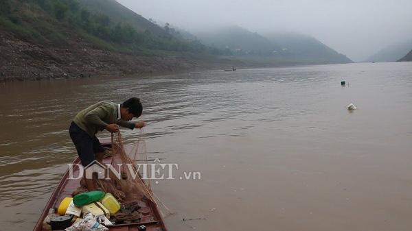 Nín thở theo dấu đàn cá ngon trên sông Đà